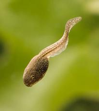 Otkriven do sada nepoznati tip ćelija u oku Biologija