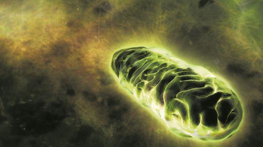 Matične ćelije popravljaju oštećenja kod drugih ćelija transferom mitohondrija Biologija