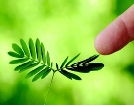 Da li biljke misle?! Biologija