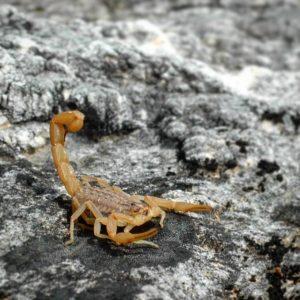 Neobične životinje i biljke Crne Gore Biologija Novosti