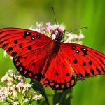 5 nevjerovatnih organa koje imaju samo životinje Biologija Novosti