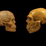 Genetička istraživanja Neandertalaca i Denisovana