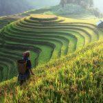 Podizanjem nivoa CO₂ riža postaje manje hranljiva