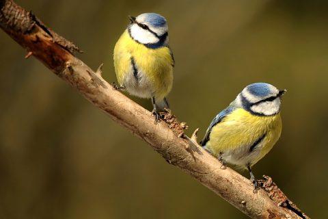 Zašto se ptice razvode ?