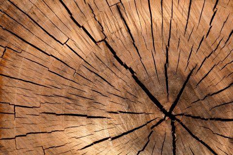 Super drvo koje je dovoljno jako da zaustavi metak