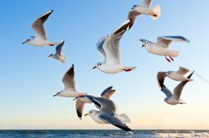 Plastični hemijski otpad privlači gladne morske ptice Novosti
