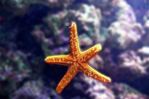 Morske zvijezde mogu da vide u mraku