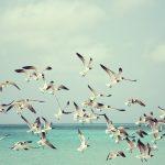 Morske ptice u krizi