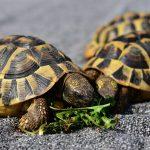 Kornjače su danas najugroženija grupa životinja na svijetu