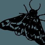 Zašto insekte privlači jako svijetlo?