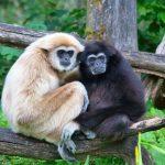 """Monogamija je možda """"zapisana"""" u našim genima"""