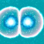 Potomci miša porijeklom od istopolnih roditelja