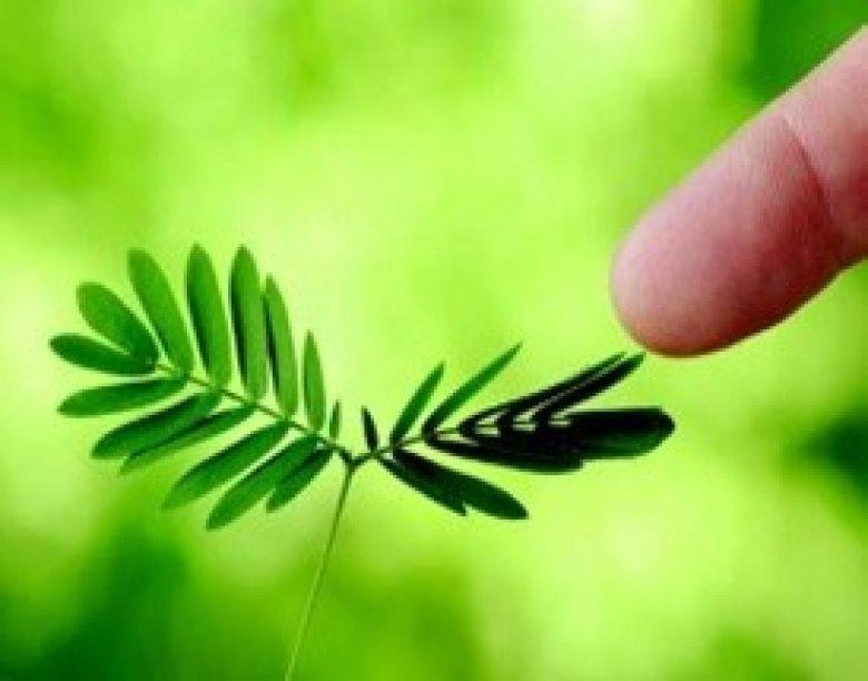 Da li biljke misle