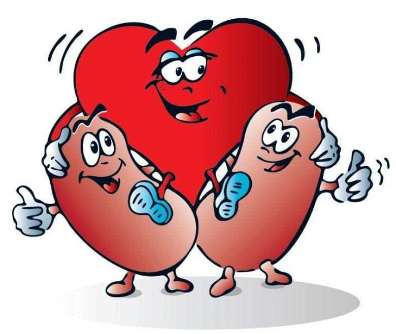 Čuvajući srce čuvamo i bubrege